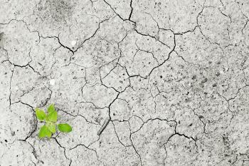 A green future amidst competing interests